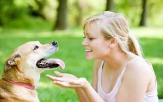 Могут ли глисты от собаки передаться человеку