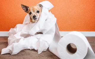 Как лечить понос у собаки