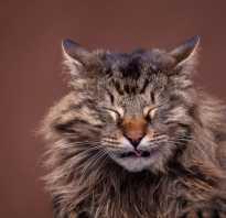 Кошка кашляет почему