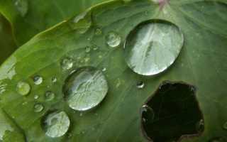 В чём заключается опасность кислотных дождей
