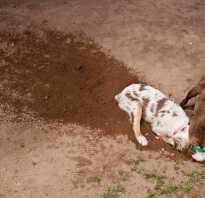 Почему собака роет ямы