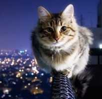 Почему считается что у кошки 9 жизней