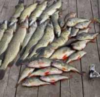 Какая рыба водится в Волге
