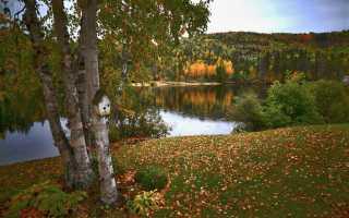 Какие в канаде растут деревья