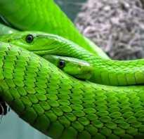 К чему снится зеленая змея