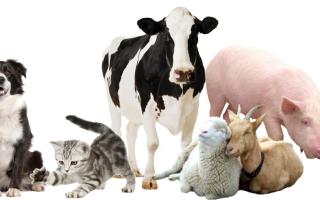 Какие животные могут считаться домашними