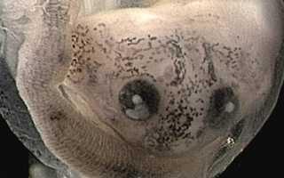 Как появляется на свет лягушка из икры