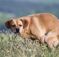 Почему собаки какают