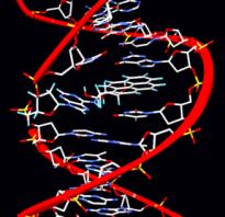 Как проявляются мутации