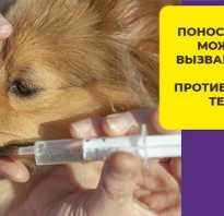 Что дать собаке от поноса