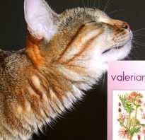 Как валерьянка действует на кошек