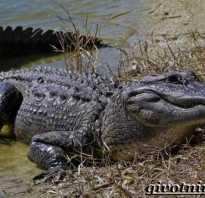 Где обитают крокодилы