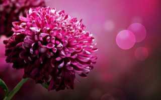 Какой цветок соответствует имени Наталья