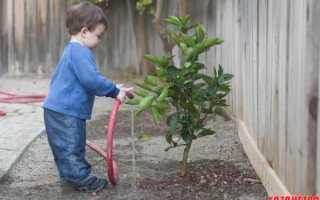 Можно ли поливать деревья во время цветения