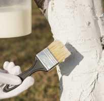Чем белить деревья осенью