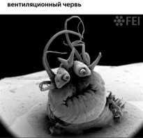 Как выглядят микроскопы