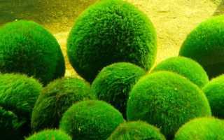 Что такое водоросли