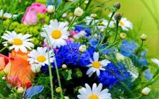 Какие есть луговые цветы