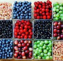 Какие ягоды самые полезные