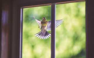 К чему птица бьется в окно