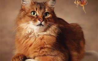 Как вылечить кота от блох
