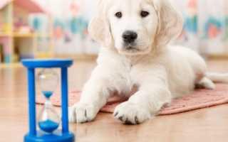 Как оставить собаку одну дома на день
